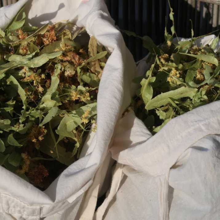 Getrocknete Lindenblüten in Stoffsäcke verpackt