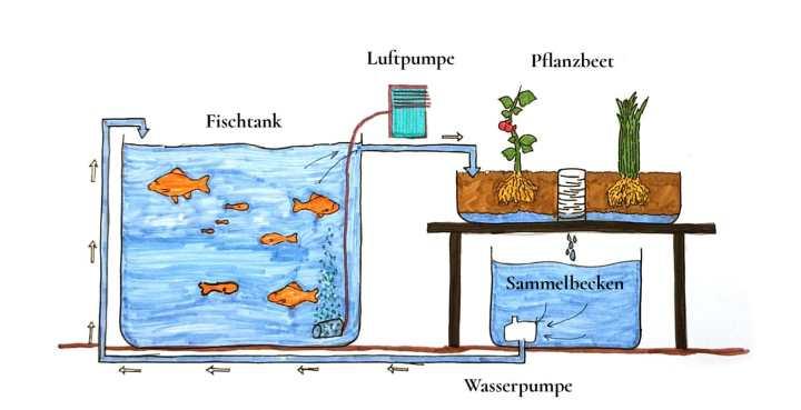 fleeds-erklaehrgrafik-wie-funktioniert-eine-aquaponik-kreislaufsystem-ganz-einfach